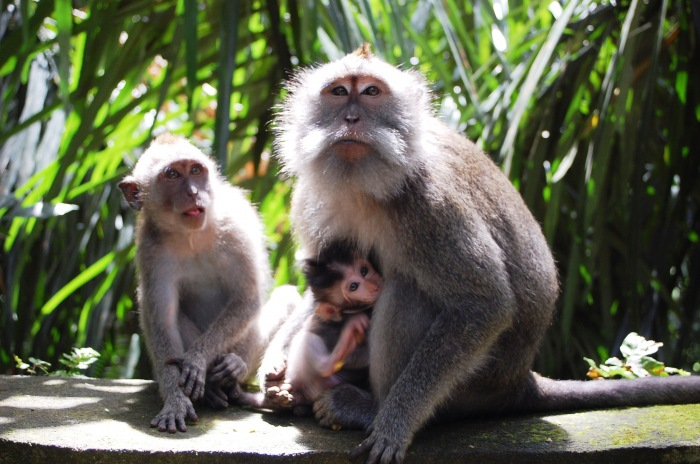 photoblog image Sun Bathing Macaque Family